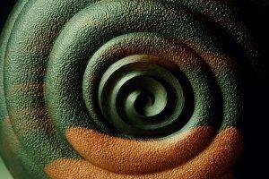 Ammonite Pod